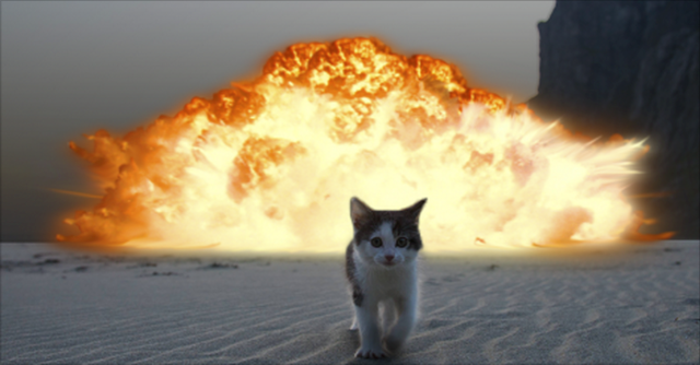 cat on fire.png