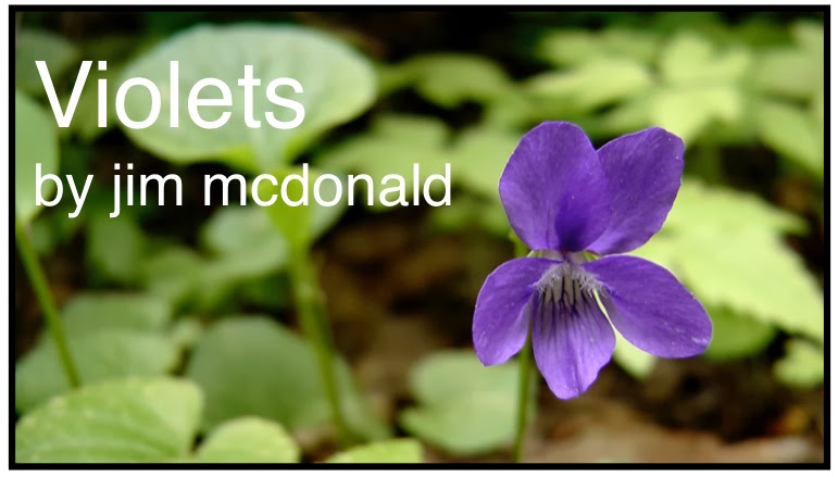 violets-by-jim-mcdonald