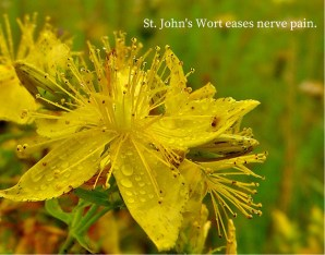 stjohnswort-for-pain