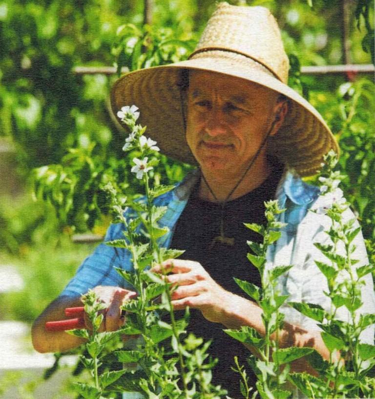 guimauve-plantes-et-sante-768x816